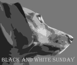 Black & White Sunday