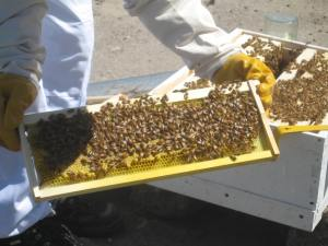That's a lot of bees!