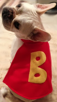 Benny & his super-cape - photo from Two French Bulldogs
